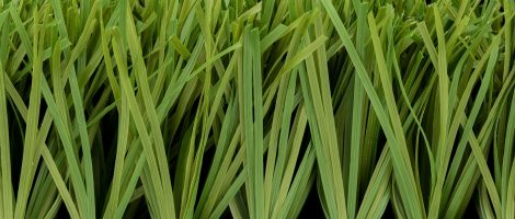 Stemgrass 60 Product Profile